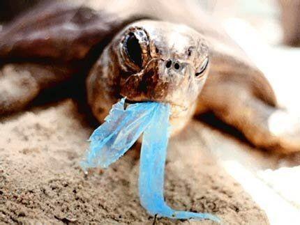Chraňme zvířata před plasty